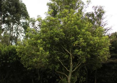 Native Tree Woodside Wairarapa Garden Tour 2018 4