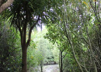 Native Tree Woodside Wairarapa Garden Tour 2018 9